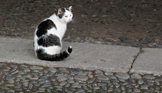 Of course there's a cat in the courtyard!